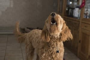 ways to stop a dog from barking