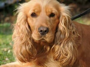 how to calm a dog with anxiety - Calming Remedies For Dogs