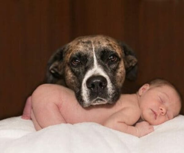 How To Introduce Your Dog To A Baby – The Proper Way