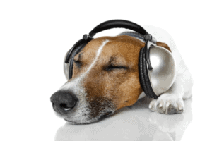 music for dogs with anxiety