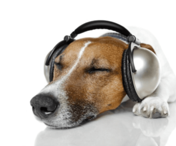 Calming Music for Dogs with Anxiety