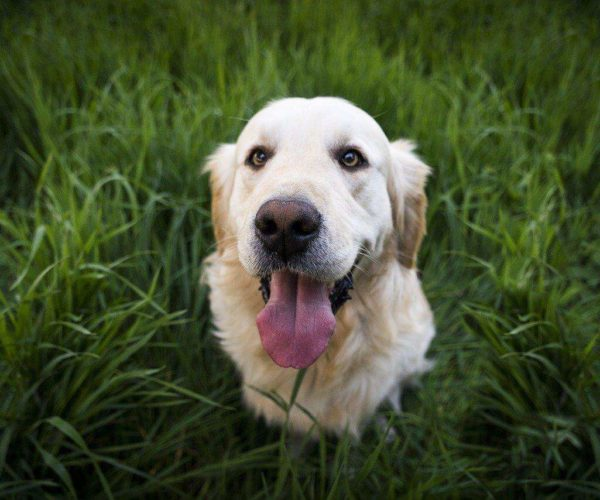 What you should know about Homeopathy and Dogs with Anxiety