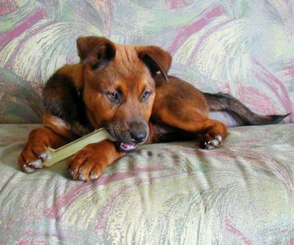 Is Nylabone Safe For Dogs?
