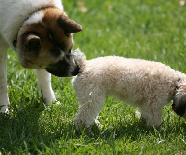 Why Do Dogs Smell Each Others Bottoms? Top 5 Common Dog Questions