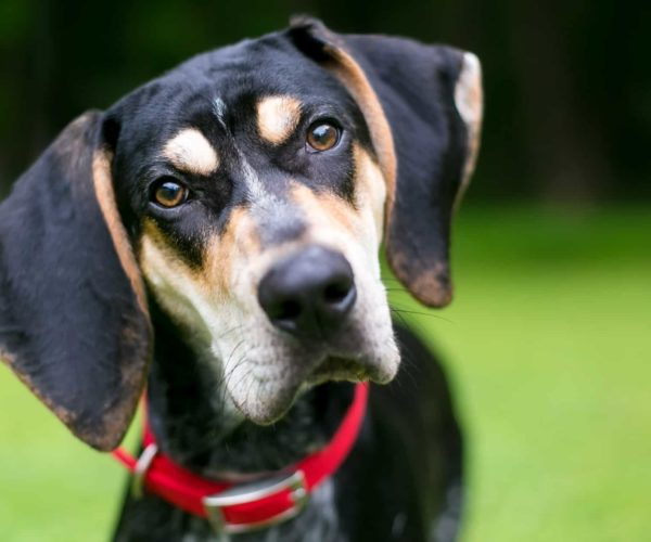 Sounds Dogs Hate – Noise Phobia in Dogs