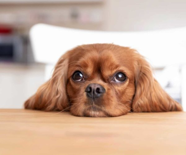 What Not To Feed A Dog – Top 24 Foods