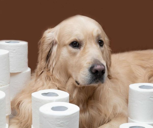 Bark Potty – For when Your Dog really Needs to Go!