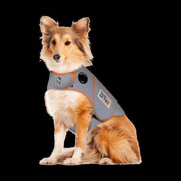 Dog wearing a thundershirt