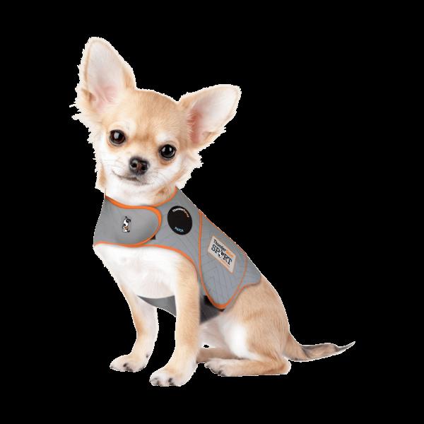 small dog thundershirt