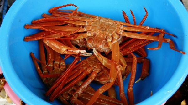 can dogs eat crab - Blue bowl of crabs
