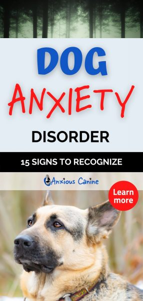 Pinterest pin for dog anxiety disorder