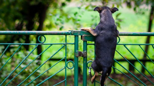 scared dog trying to escape over the fence