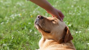 Are dogs ticklish - dog being tickled on the head