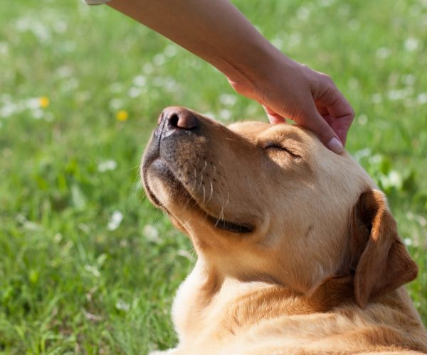 Are Dogs Ticklish? – how to Tell if Dogs Are Ticklish
