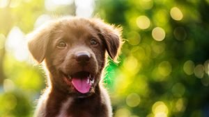 Brown puppy - dog names starting with B