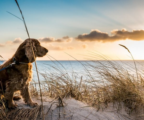 Natural Antibiotics for Dogs – The Top 6 Alternatives