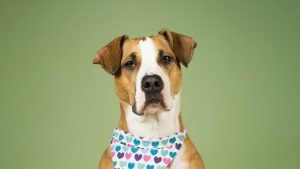 CAN DOGS EAT OLIVES? - dog on an olive background