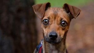 dog panic attack - scared dog